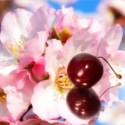 Parfumés et aromatisés